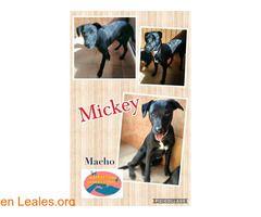 Mickey y Minnie Maspalomas Animal Rescue ℹ  Hoy hemos recogido a estos dos cachorros en Sonneland sin microchip. Si saben del propietario por favor ponerse en contacto con nosotros. Muchas gracias por compartir  Contacto Facebook  https://www.facebook.com/Maspalomas-Animal-Rescue-654140774770377/   #Perdido #Encontrado  Contacto y Info: Pulsar la foto o aquí: https://leales.org/perdidos-o-encontrados/perros-encontrados_1/mickey-y-minnie-maspalomas-animal-rescue_i2908    Acerca de esta…