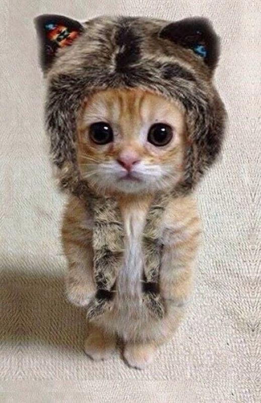 Too cute! I think I died!