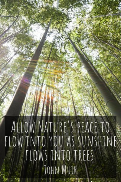 9c8be073fc4517 Allow nature s peace to flow into you as sunshine flows into trees. John  Muir Quote  JohnMuir  Nature  Peace  Trees  Sunshine  Quote