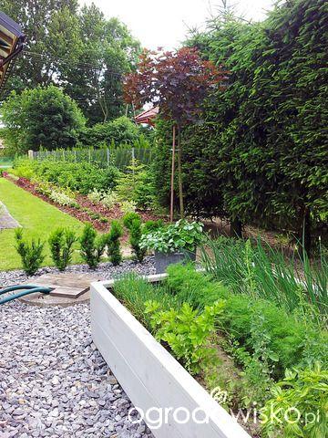 Moja codzienność - ogród Oli - strona 489 - Forum ogrodnicze - Ogrodowisko