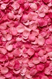 花びら壁紙 : 【iPhone 4】かわいいピンクの壁紙【女子向け】 - NAVER まとめ