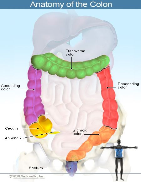 Anatomy of the Colon (large intestines). The color scheme helps to clarify the divisions of the large intestines.