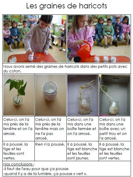 Ecole maternelle LEO LAGRANGE - Des haricots