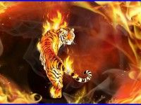 Tiger Fire Wallpaper 2721 Background