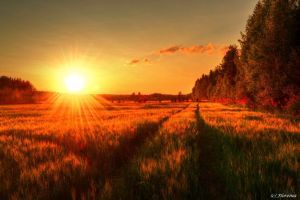 Scandinavian autumn 2 by Floreina-Photography