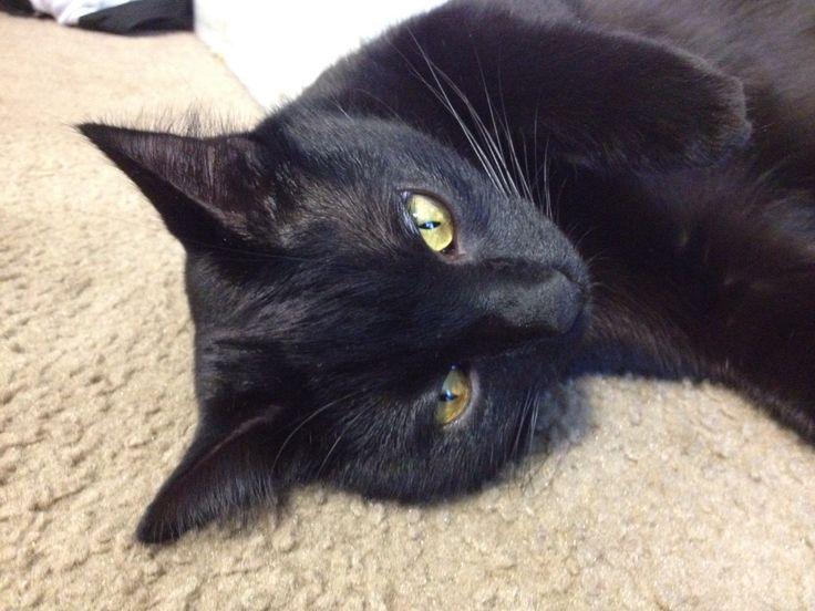 Black Cat.... C.K. Dexter Haven