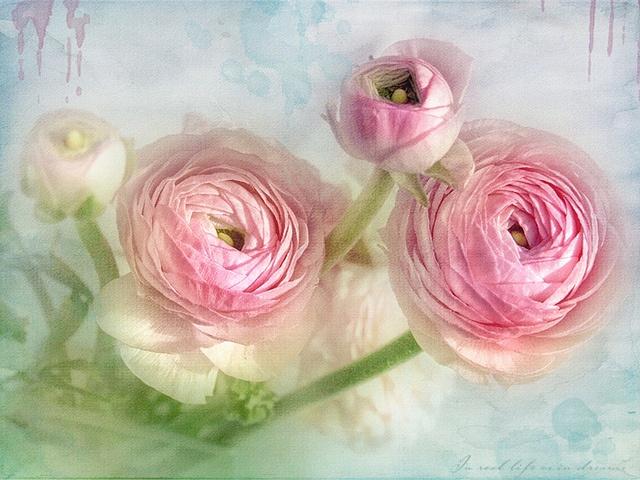 lizzy.pe. | sun seeker | pastel colors + blue pink green + flowers ranculus texture