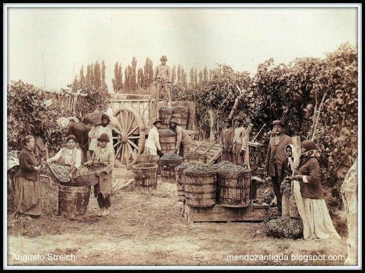 Pesando la uva luego de la cosecha ( año 1890). Mendoza