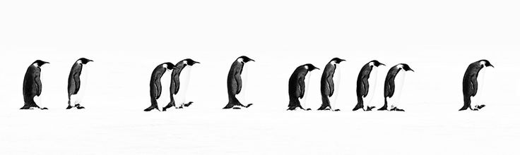 """The Long March - Snow Hill, Antarctica, 2010; Archival Pigment Photograph; AVAILABLE SIZES: LARGE: 24"""" x 80""""; STANDARD: 16"""" x 53""""; AVAILABLE EDITIONS: LARGE: Edition of 20; STANDARD: Edition of 20"""