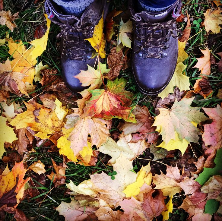 Time to get out into the Shropshire countryside and enjoy the marvellous leaf colours. Here's a suggestion for some local autumn walks full of colours  #autumn #walking #shropshire #fall