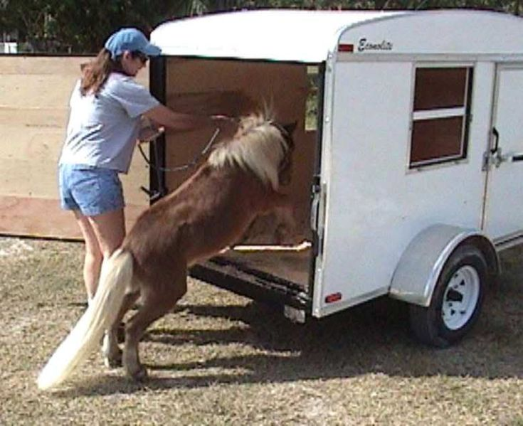 Enclosed cargo trailer converted to mini horse transport. Could use a video monitor to keep your eye on them for longer rides.