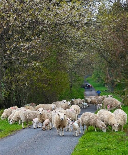 ~ Irish traffic congestion.