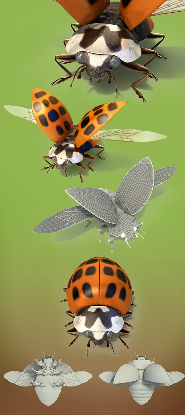 Asian Lady bugs on Behance