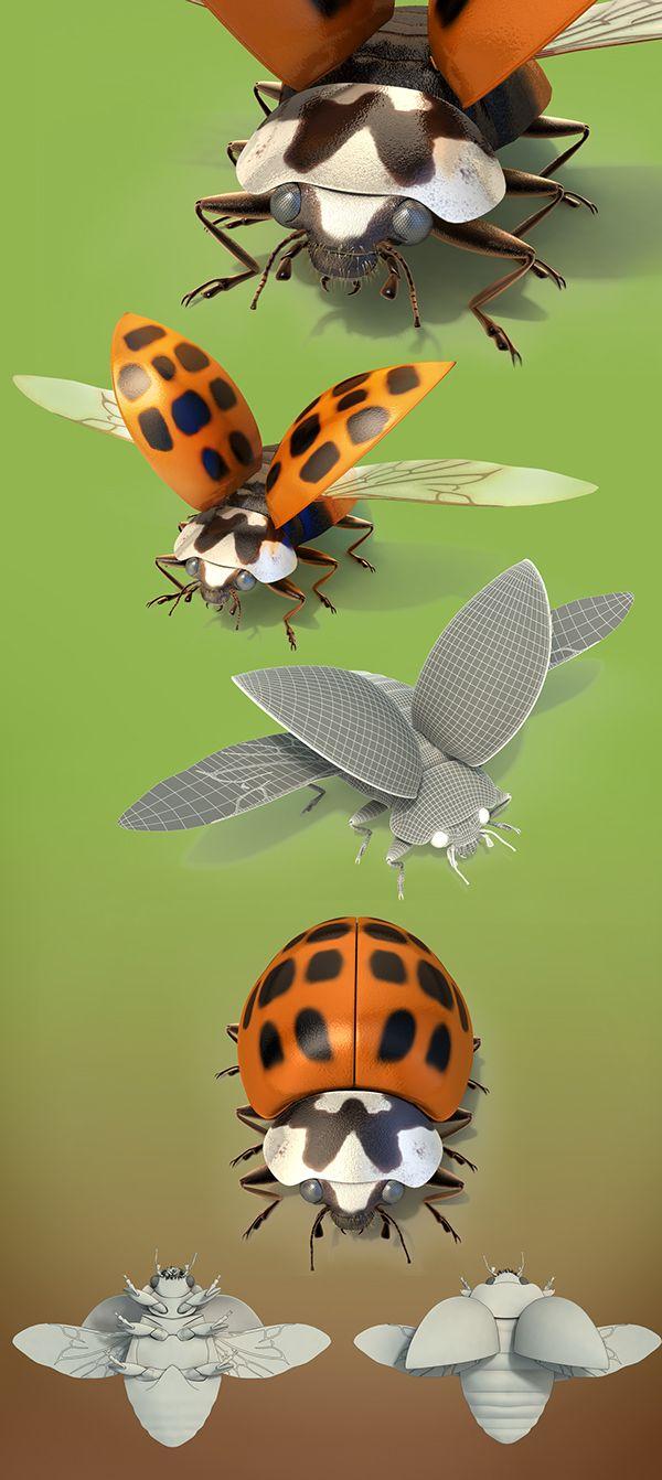 Asian Lady bugs on Behance