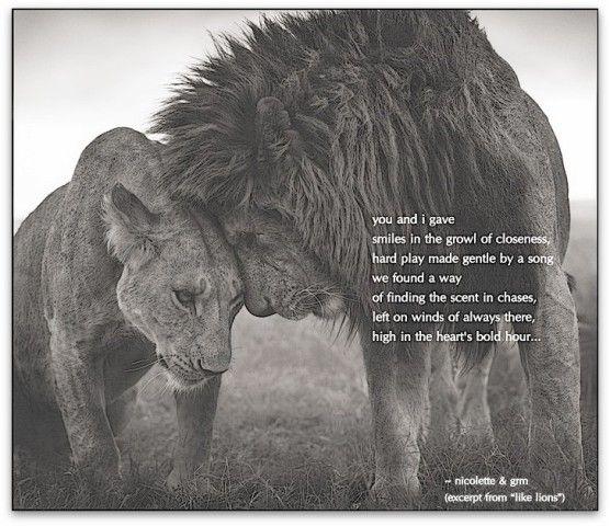 Like lions © Nicolette van der Walt