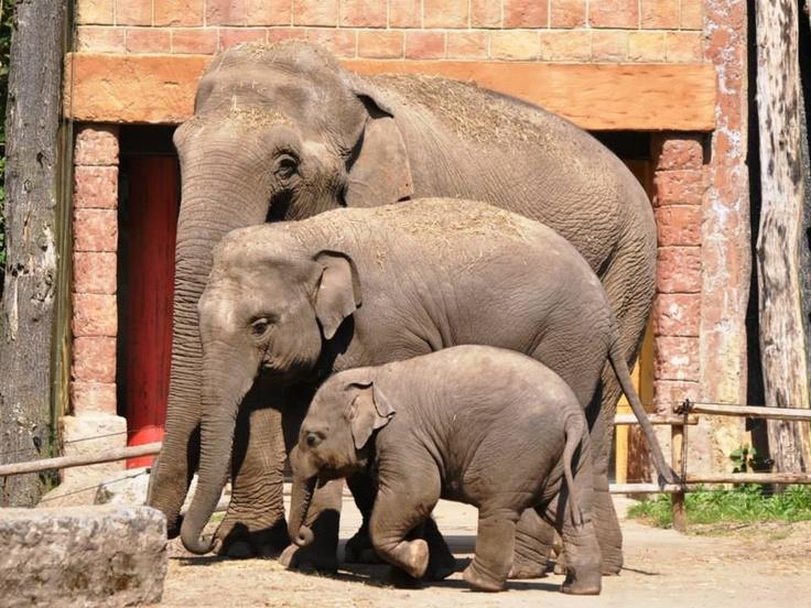 .Small , medium, large elephant family