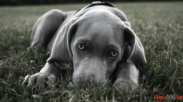Il cane più bello del mondo foto