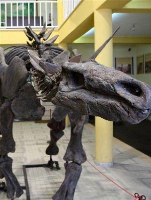 Câmara quer ideias para Parque Jurássico - Portugal - Correio da Manhã