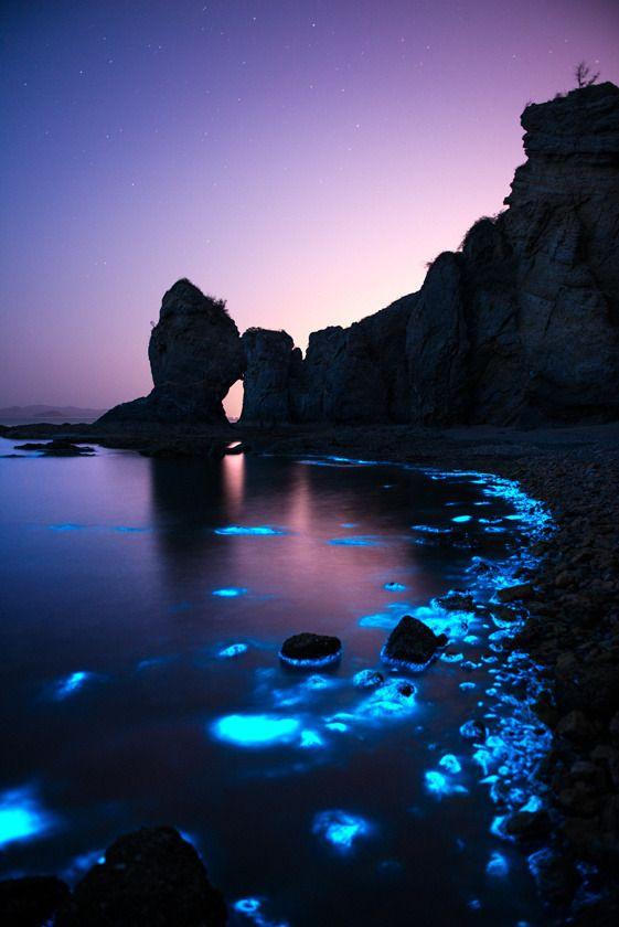 "ponderation: "" Fluorescent sea night by Shanye wuyu """