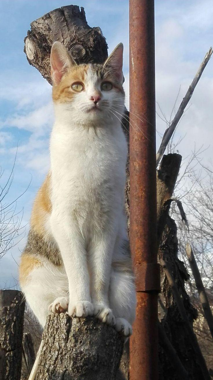 Gatto - La regina