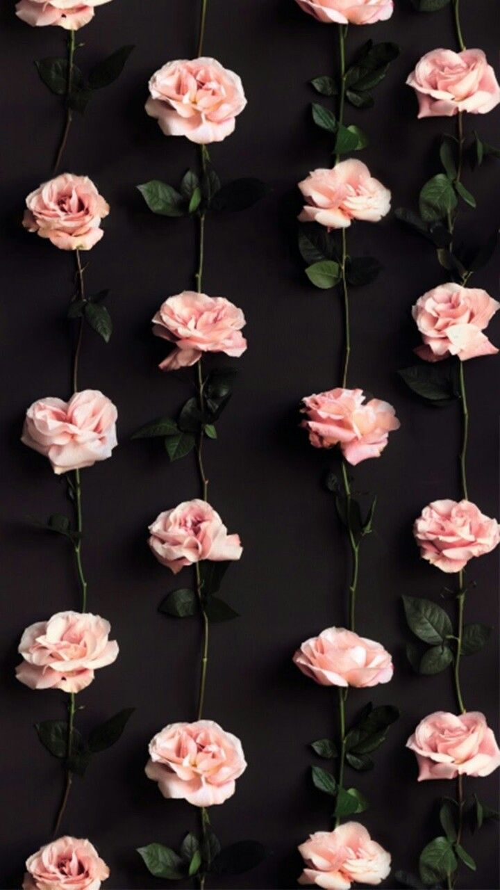 Pin By Nur Shafiqah On Wallpaper Flower Wallpaper Photography Wallpaper Rose Wallpaper