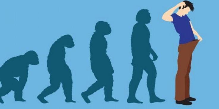 evolutia penisului