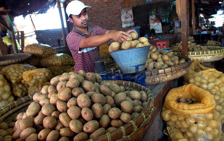 dieng-kena-cuaca-ekstrem-harga-kentang-mulai-naik-11 %