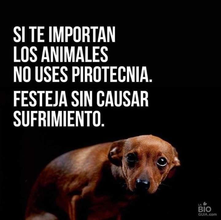 Pin De Debbie Hooper En Gatitos Y Mas Mascotas Frases Animales Frases Amo Los Perros