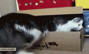 Very satisfying gif...perfect fit