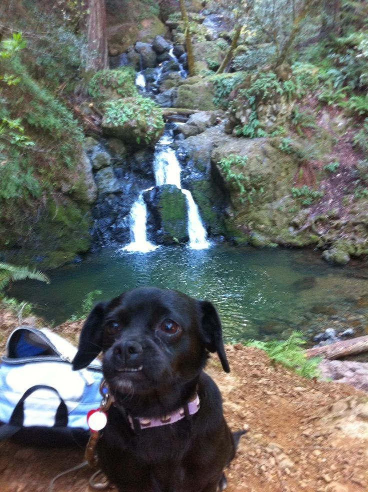 Dog Friendly Hikes Near Sacramento