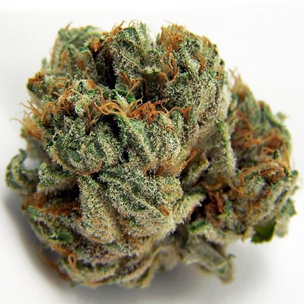 Best Chocolope OG Kush House of Cannabis