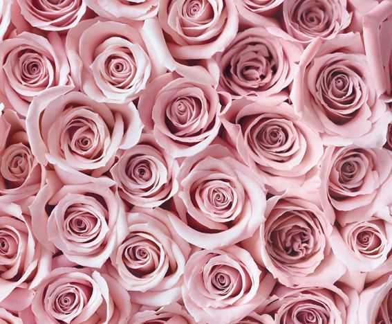 Love these #pink #roses