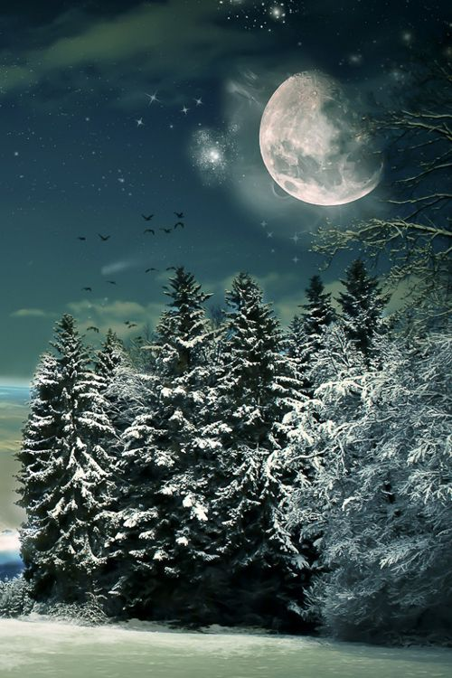 Winter ~ By Danielle Hughson1,478 notes