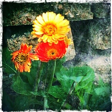 Edited with Pixlr-o-Matic