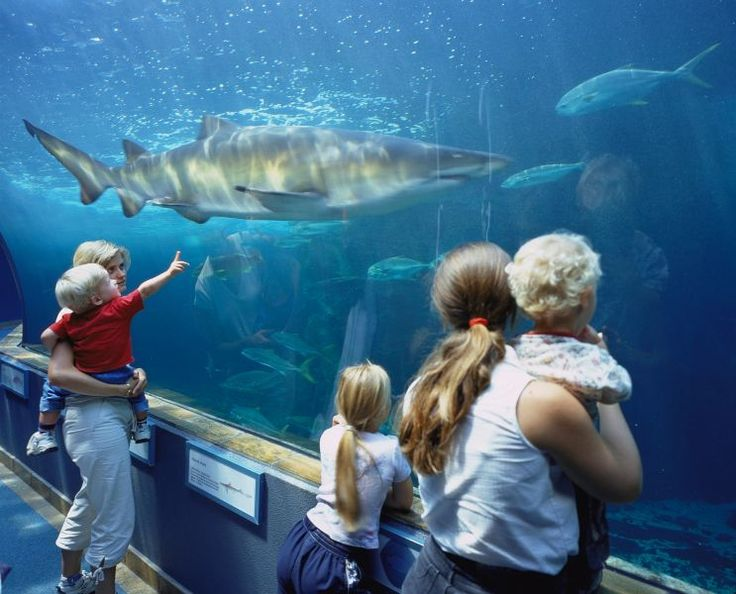 Enjoy a family outing in Cape Town – Blog – South African Tourism