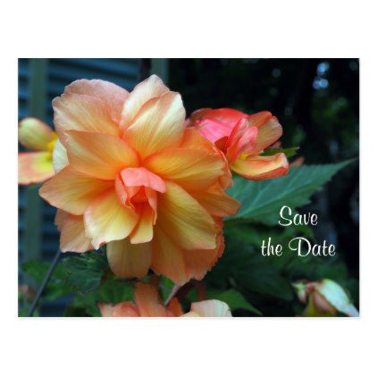 Begonia Save the Date Postcard - postcard post card postcards unique diy cyo customize personalize