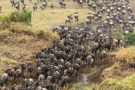 The great migration  #AFRICA #greatmigration