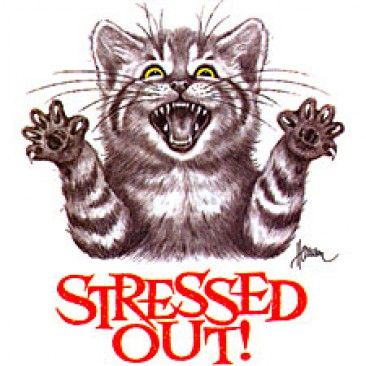 While we may think that stress only affects humans, the fact is that cats can easily become stressed and show this by inappropriate elimination. The intelligence and sensitivity of cats makes them susceptible to stress, and when you begin to find puddles on furniture or rugs, it could well be the result of an upset and fearful cat.