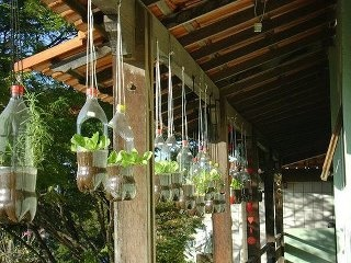 recycle those 2 liter pop bottles and plant a garden, only problem is I don't have plastic bottles to begin with...