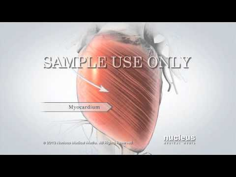 L'anatomia del cuore come non l'avete mai vista: incredibile video 3D fullHD - Guardalo