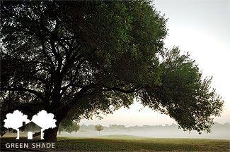 CPS Green Shade Tree Rebate Program for 2015-2016 | Milberger's Landscape & NurseryMilberger's Landscape & Nursery