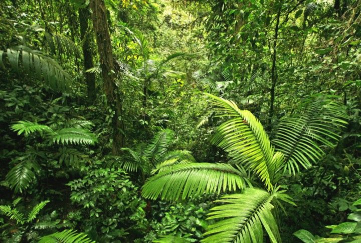 Fototapete Nr. 3193 - Tropischer Regenwald, Costa Rica                                                                                                                                                     Mehr