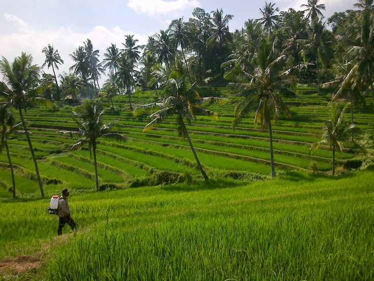 Bali, Buleleng - Panji : How about this ?