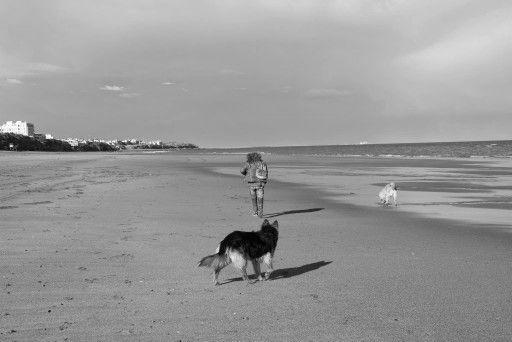 #olas #animales #sombras #paisajes