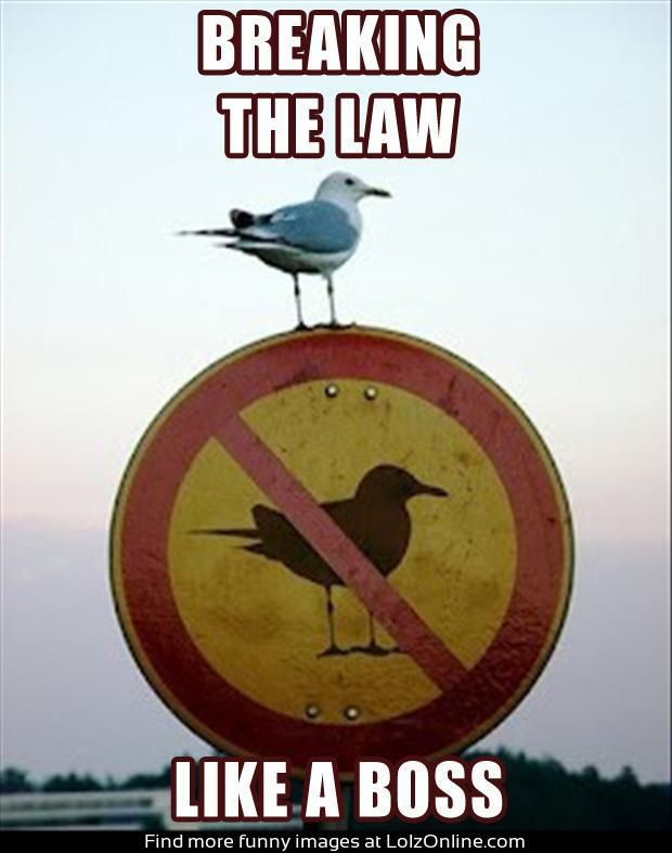 This is hilarious! Although why is there a no bird sign to start with? Did they think the birds were gonna read it?