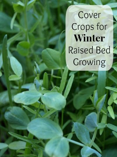 What kinds of cover crops should you plant for the winter? You can greatly increase the nitrogen levels of your soil and help protect against erosion by planting cover crops!