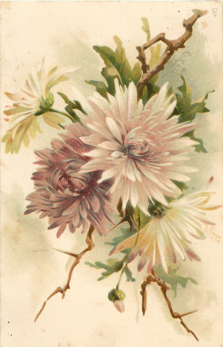Коллекция картинок: Антикварные открытки от Cathеrine Klein.Цветы 2