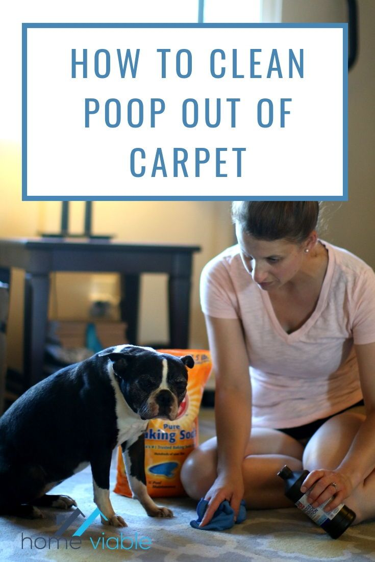 how to clean dog feces out of carpet