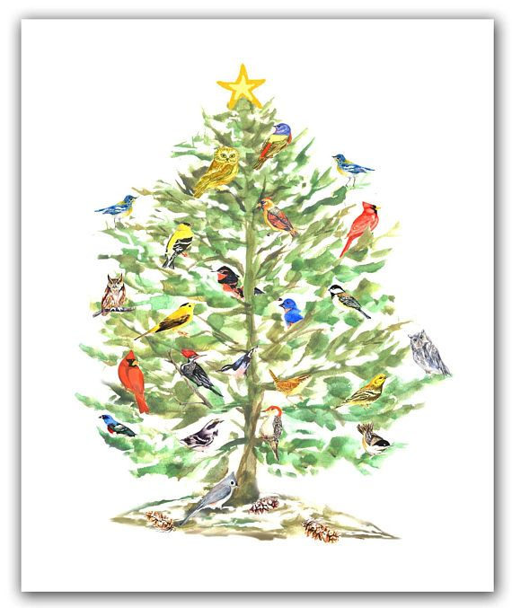 Song Bird Christmas Cards Winter Solstice Bird Cards Holiday Etsy Bird Lover Gift Christmas Cards Holiday Birds