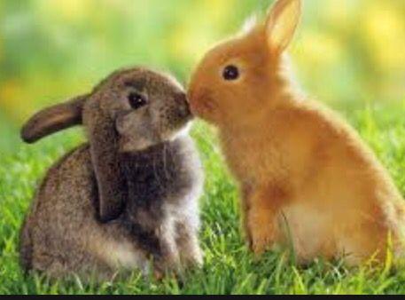 I wish i could kiss someone... #bunnylove